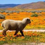 mojave-desert-california-Dan Harding